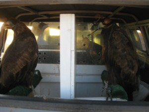 A look in the back of my truck
